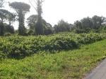 69-Rancho consistente en 37,63 hectáreas para la venta-VENDIDO
