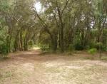 68-Pino rancho de 10 acres de tierra-VENDIDO