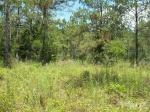 72-La tierra en el norte de Florida con 86 acres de espacio para la venta-VENDIDO