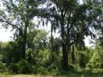80-200 acres de tierras agr� colas para 2.000.000 dólares-VENDIDO